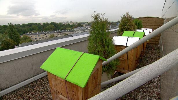 Pasieka na dachu jednego z warszawskich hoteli TVN 24