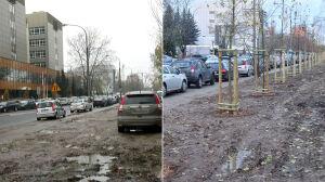 Koniec z dzikim parkowaniem. Drzewa zamiast samochodów