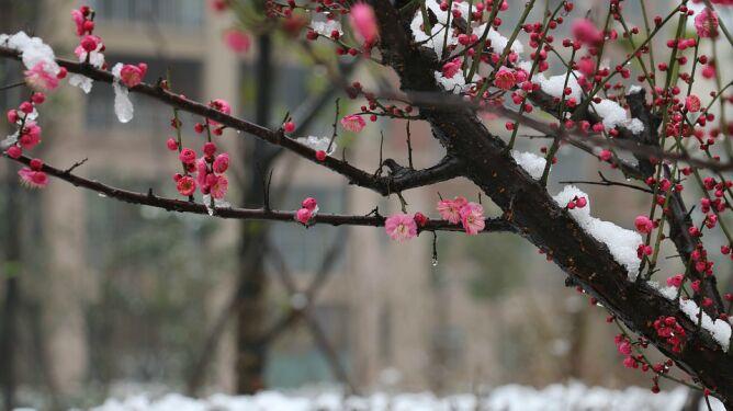 Prognoza pogody na pięć dni: niewykluczone, <br />że lokalnie spadnie deszcz ze śniegiem