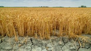 Fale upałów, choroby układu krążenia, ginące gatunki. Tak Polska odczuje zmiany klimatu