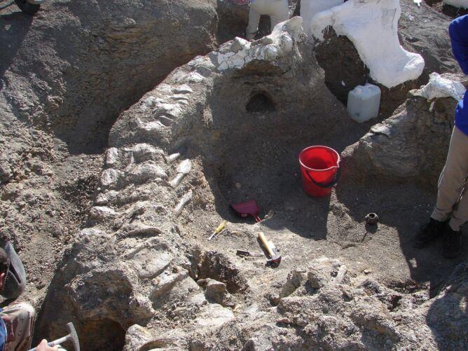 Odkopywanie skamielin trwało dziewięć lat