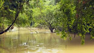 """W amazońskim lesie będą wydobywać ropę. """"Świat nas zawiódł"""""""