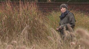Kolekcje traw, bylin i krzewów w przydomowym arboretum (odc. 471)